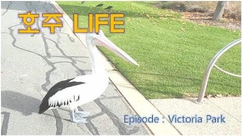 쉐파톤 멜번 호주 이민 워홀 vlog Victoria park