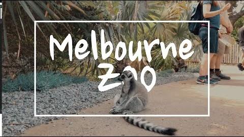[브이로그] 아이들과 함께하는 호주 첫번째 이야기 - 멜버른 동물원