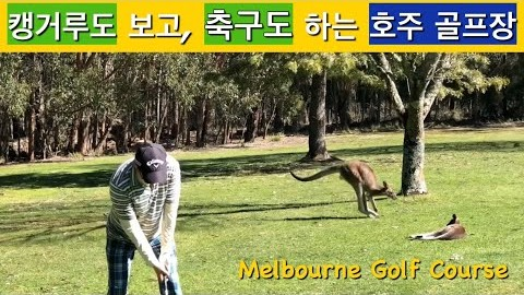 [호주라이프 즐기기] : 멜버른의 100년된 숲속의 힐링 골프코스 /