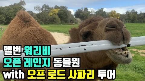 [Vlog] 멜번 브이로그 워리비 오픈 레인지 동물원 with 사파리 투어
