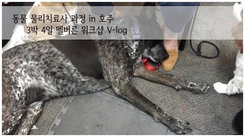 [V-log] 동물 물리치료 3박 4일 워크샵 in 멜버른