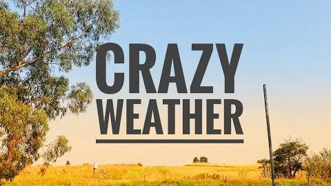 호주 멜버른Vlog/평화로운 날에 이게 무슨일이야?/와다다 내리는 우박은 처음일껄??같이 산책해요