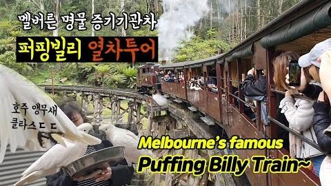 타임머신 타고 온듯! 멜버른 퍼핑빌리 열차, 달콤살벌 호주 앵무새 | Melbourne Puffing Billy Train Tour