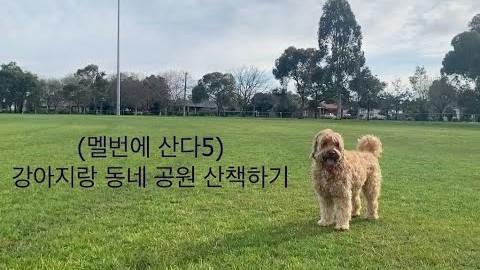(멜번에 산다5) 강아지랑 동네 공원 산책하기 (진져 스페셜)
