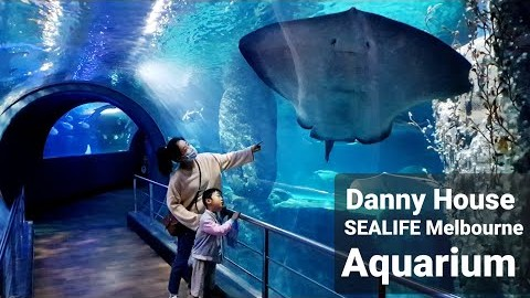 (ENG)호주멜번생활 - 멜번아쿠아리움(Welcome to Danny House -SEA LIFE Melbourne Aquarium)