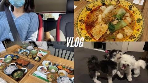 Melb vlog | 호주 멜버른 브이로그 | 마라탕 / 차돌숙주볶음 / 닭똥집튀김 / 태국 음식 / 일식  일주일 내내 아시안 음식들로 채운 일상